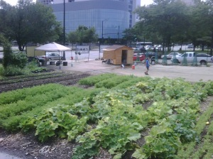Chicago Lights Urban Farm (photo: Laurell Sims)