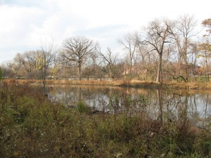 Restored wetland at Gompers Park, adjacent to the Chicago River's North Branch (photo: M. Bryson)
