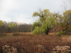 The wetland at North Park Village Nature Center(photo: M. Bryson)