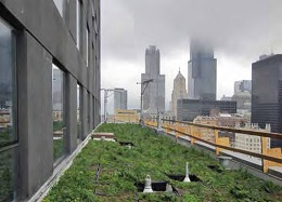 One of the several green roofs on RU's LEED Gold-certified Wabash Building