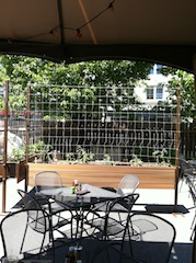 After trellis and tomato installation (M. Miller)