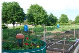 RUrbanPioneers Community Garden at Roosevelt's Schaumburg Campus, Summer 2013 (M. Radeck)