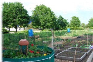 RUrbanPioneers Community Garden at Roosevelt's Schaumburg Campus, Summer 2013 (M. Radeck)
