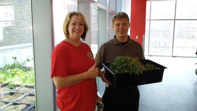 Garden Harvest as of June 11th from the Wabash Building rooftop gardens at RU's Chicago Campus (over ten pounds in two weeks); pictured here at RU sustainability interns MaryBeth Radeck and Kevin Markowski