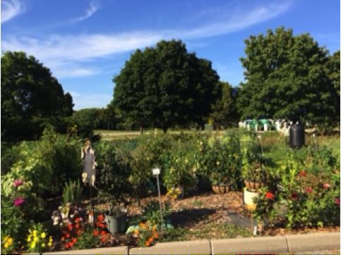 The RU community garden in 2014 (M. Rasic)