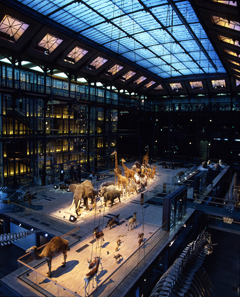 Grand Gallery of Evolution, Museum of Natural History, Paris  (photograph by L Bessol  © Muséum National d'Histoire Naturelle)