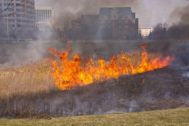 The first prescribed burn of the Schaumburg Campus detention pond, 13 April 2011 (photo: K. Franklin)