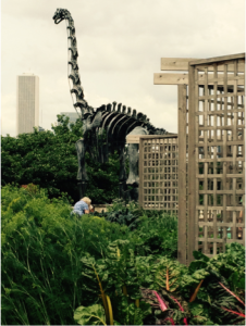 The Field Museum's Edible Treasures Garden and friend (photo: L. Miller Hill 2015)