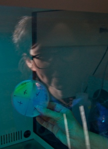 Dr. Anne-Lize Ducluzeau examining Arctic bacteria, some of which are bioluminescent (M. Hoffman)