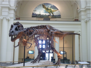 Stanley Field Hall at the FMNH (L. Miller Hill)