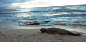 A basking monk seal (E. Rhea)