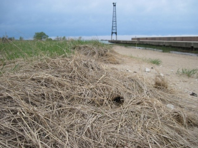 Water inlet from Lake Michigan along the 'fishhook' pier. May 2015. Photo: Karen Craig