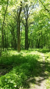 Busse Woods is located in the center of several residential areas. Hiking deep into the woods one would never suspect this. (photo: E. Gavrilovic)