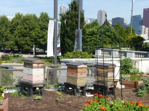 Beehives outside the Shedd Aquarium. (photo: L. Miller Hill)