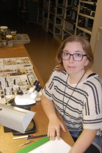 SUST major Lindsey Sharp i the FMNH mammalogy lab, Fall 2015 (J. Kerbis)