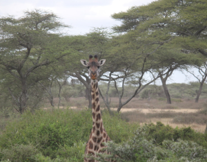 At Serengeti National Park