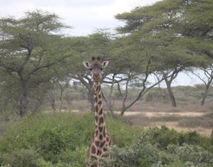 At Serengeti National Park