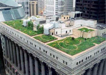 Chicago_Green-Roof_c-Mark-Farina_104.jpg